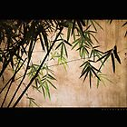 Vintage Bamboos by Delphimages