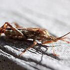 Leaffooted bug by Jazzy724