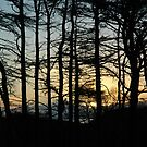 Ardsheall Woods Sunset by cuilcreations