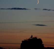 Fall moon rises by Miracle Conspiracy