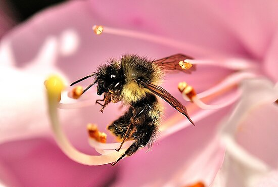 The Bee Knows Best by Graeme Nix