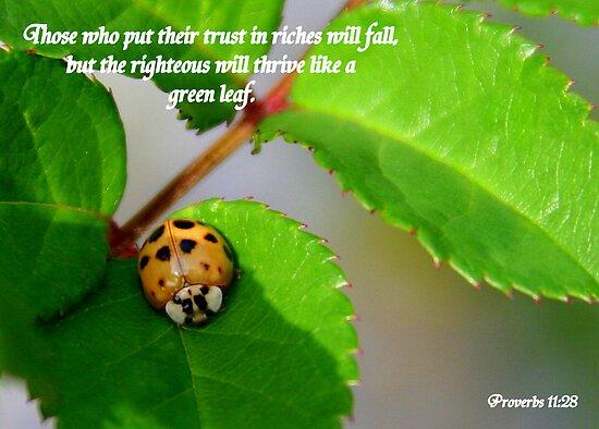 Proverbs 11:28 by Paula Tohline  Calhoun