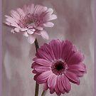 Pink by OpalFire