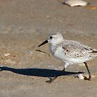 Sandpiper by BigD