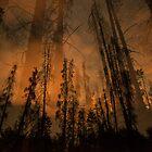 Forest Glow (Orange) by Armando Martinez