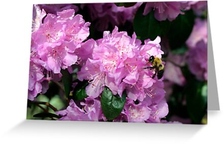 Spring Bee & Azalea Blossoms by Gene Walls