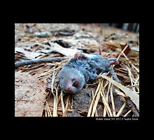 Tragic Life End Of A Grey Mouse  by © Sophie W. Smith