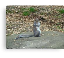 Do It Gangnam Style - Gray Squirrel goes Korean Canvas Print
