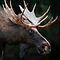 ***ANTLERS, RACKS, AND OTHER HORNED ANIMALS***