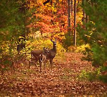 Autumn Doe and Fawn by Thomas Young