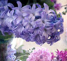 Hyacinths for Spring by Margi