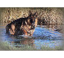 Doggy  Paddle Photographic Print