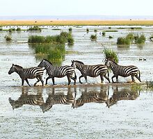 Everyone's Out of Step Except My Little Zebra by Carole-Anne