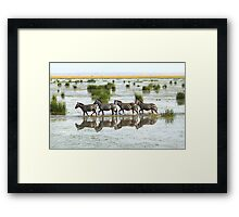Everyone's Out of Step Except My Little Zebra Framed Print