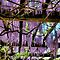 *Wisteria* by DeeZ (D L Honeycutt)