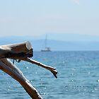 Sailing yacht passes driftwood, Skiathos, Greece by MJDphotography