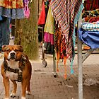Market Staffie by Becky Hagan