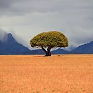 Single in the Klein Karoo by croust