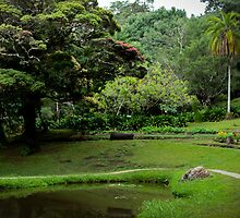 Park and Pond by Dimuthu  Sudasinghe
