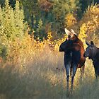 Cow And Calf Moose by Chris  Gale