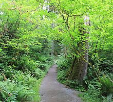 Forest Trail : Olympic National Park by Gstudio