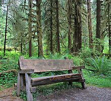 Forest Bench : Olympic National Park by Gstudio