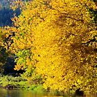 Autumn Gold by Kathleen Daley