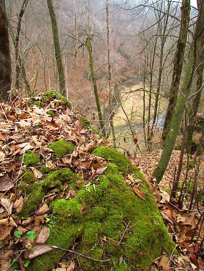 Moss Upon Rock by lorilee