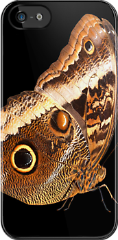 Owl Butterfly by neil harrison