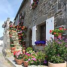 Pretty seaside cottage with flower pots, Brittany, France by silverportpics