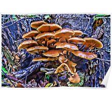 Velvet Foot Mushrooms Poster
