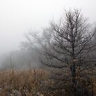 Tamarack in December by Robin Clifton