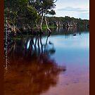 iPad case - Lake Ainsworth Morning by Odille Esmonde-Morgan