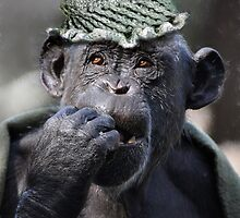 Chimp In Hat  by venny