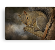 Squirrel Pose Canvas Print