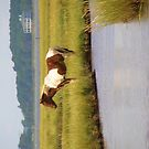 Wild Pony in the Marsh on Assateague Island MD by ArtShopEtc