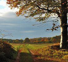 Dreaming of an autumnal walk by jchanders