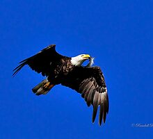 Eagle fish in Mouth by Randy & Kay Branham