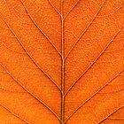Autumn leaf Study by enphoto