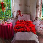 Bed Of Poinsettas by Kathy Baccari
