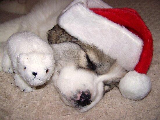 Santa's Little Helper by pics4me