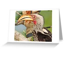 Yellow billed hornbill profile Greeting Card