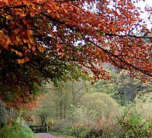 Colours of Autumn at Ogden reservoir Halifax Yorkshire by andypatt