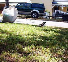 I Wonder Where She Parks Her Broom? by Robert Phillips