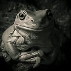 Portrait Of A Green Tree Frog B&amp;W by Kerrod Sulter