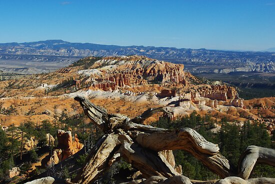 Dry log and Bryce  by Claudio Del Luongo