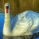 Rydal Swan by Jamie  Green