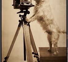 Vintage Pho Dog Grapher by Edward Fielding