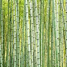 Bamboo background by Cebas