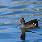 Common Moorhen Reflected by Sue Robinson